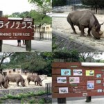 三冠クロサイにあやかりんサイ~広島市安佐動物公園~
